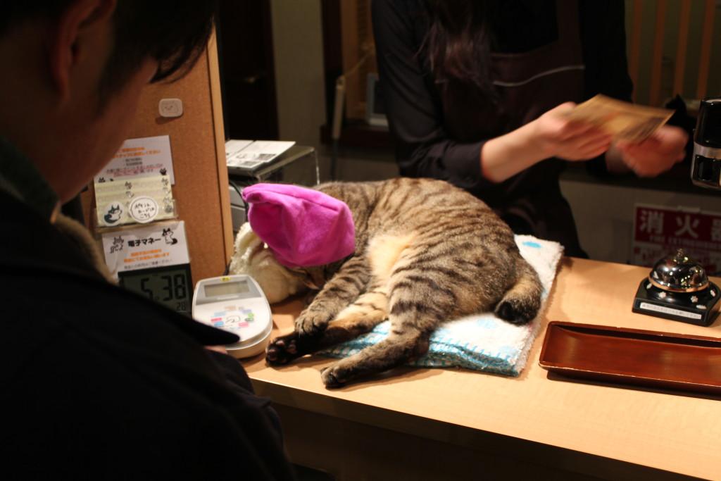 Kattekafe. Avslappende og hyggelig avbrekk fra alt^^,